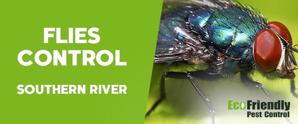 Flies Control Southern River