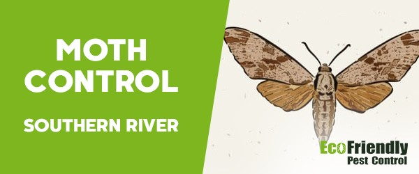 Moth Control Southern River
