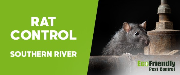 Rat Pest Control Southern River