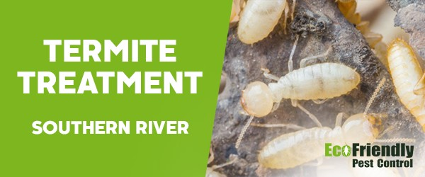 Termite Control Southern River