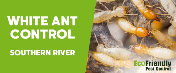 White Ant Control Southern River