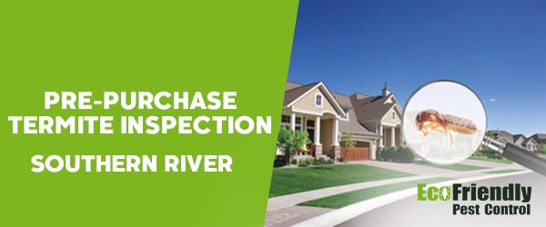 Pre-purchase Termite Inspection Southern River
