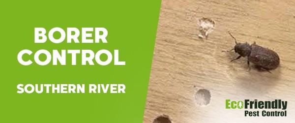 Borer Control Southern River