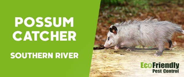 Possum Catcher Southern River