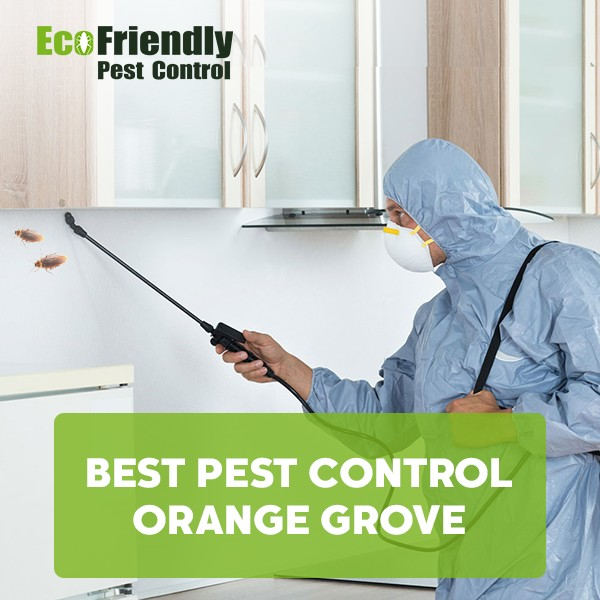 Pest Control Orange Grove