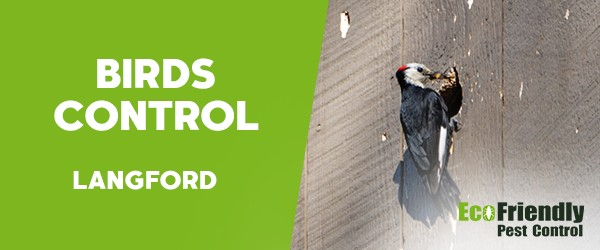 Birds Control  Langford
