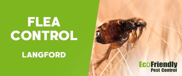 Fleas Control  Langford