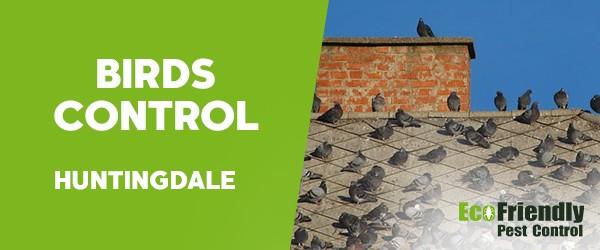 Birds Control  Huntingdale