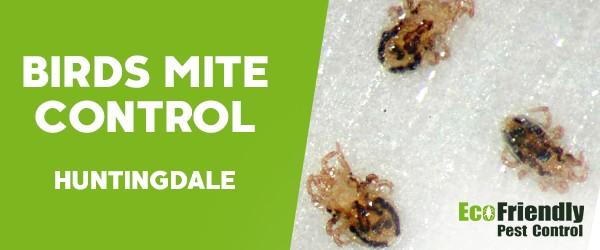 Bird Mite Control  Huntingdale