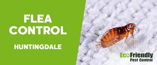Fleas Control  Huntingdale