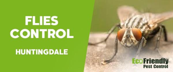 Flies Control  Huntingdale