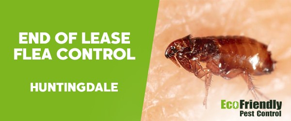 End of Lease Flea Control  Huntingdale