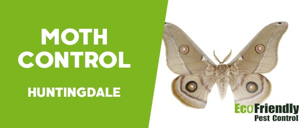 Moth Control  Huntingdale