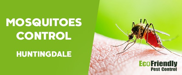 Mosquitoes Control  Huntingdale