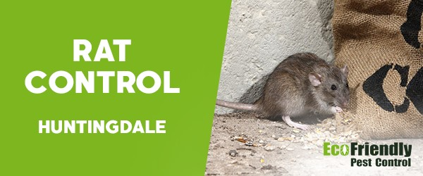 Rat Pest Control  Huntingdale