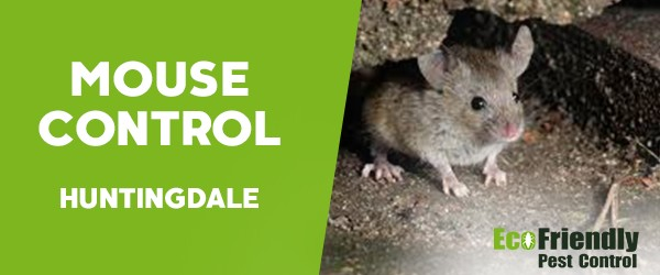 Mouse Control  Huntingdale