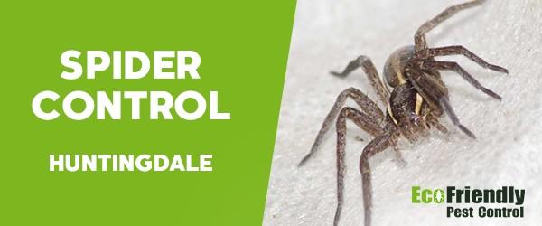 Spider Control  Huntingdale