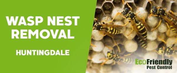 Wasp Nest Remvoal  Huntingdale