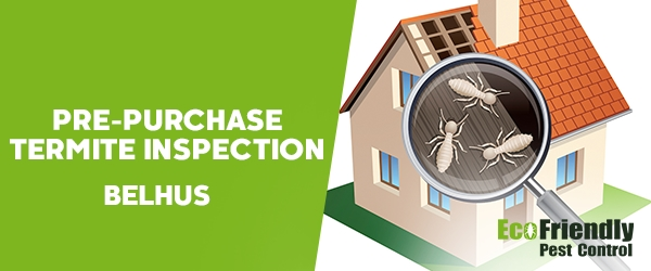 Pre-purchase Termite Inspection  Belhus