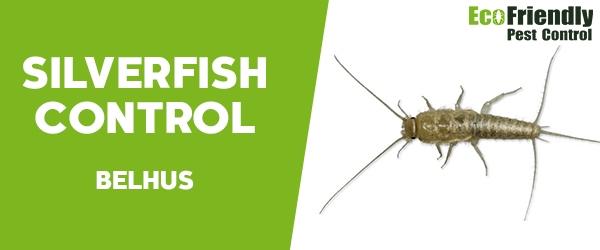 Silverfish Control  Belhus