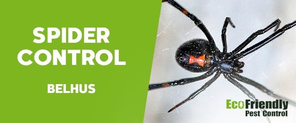Spider Control  Belhus