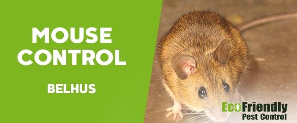 Mouse Control  Belhus