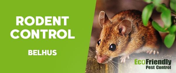 Rodent Treatment  Belhus