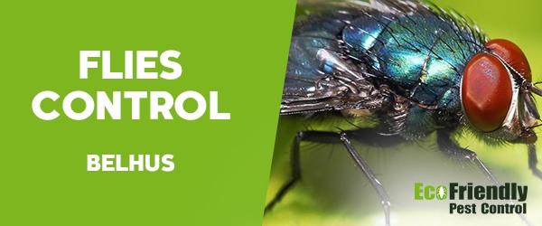 Flies Control  Belhus