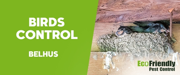 Birds Control  Belhus