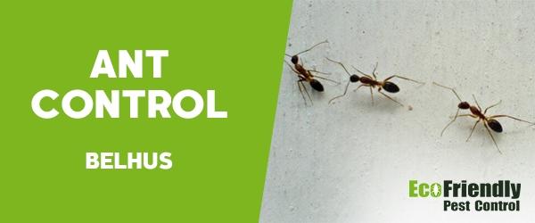 Ant Control  Belhus