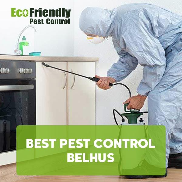 Best Pest Control  Belhus