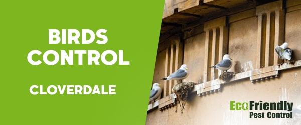 Birds Control  Cloverdale