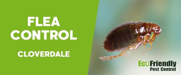 Fleas Control  Cloverdale