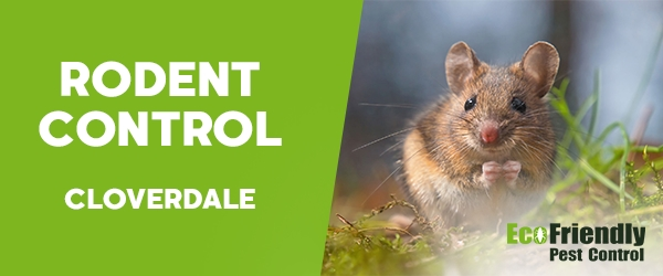 Rodent Treatment  Cloverdale