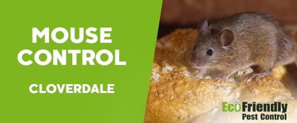 Mouse Control  Cloverdale