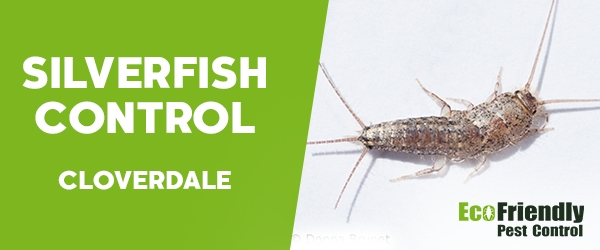 Silverfish Control  Cloverdale
