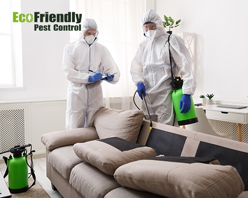 Pest Control  Redcliffe
