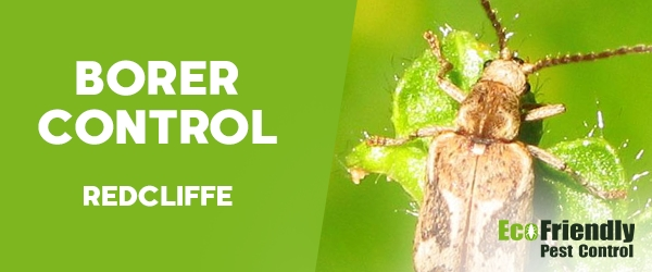 Borer Control  Redcliffe