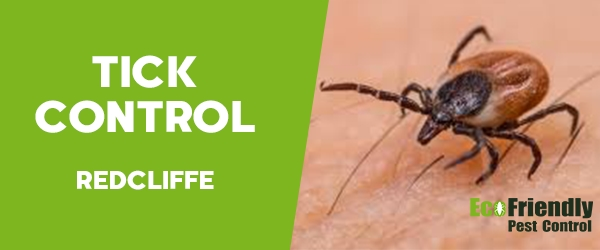 Ticks Control  Redcliffe