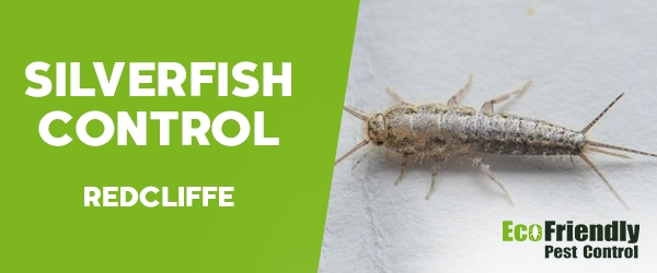 Silverfish Control  Redcliffe