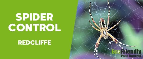 Spider Control  Redcliffe