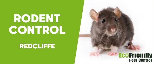 Rodent Treatment  Redcliffe