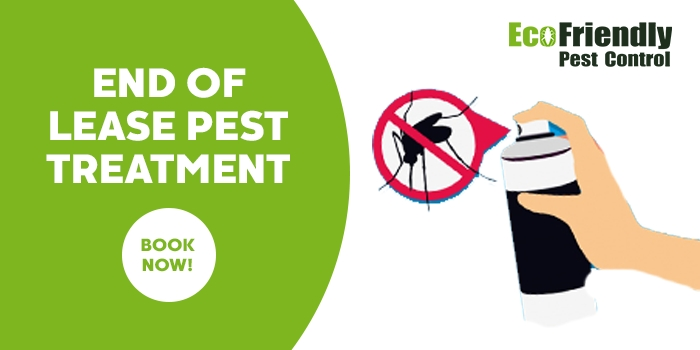 End of Lease Flea Control  Redcliffe