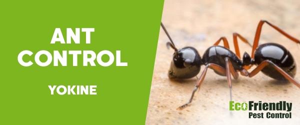 Ant Control  Yokine