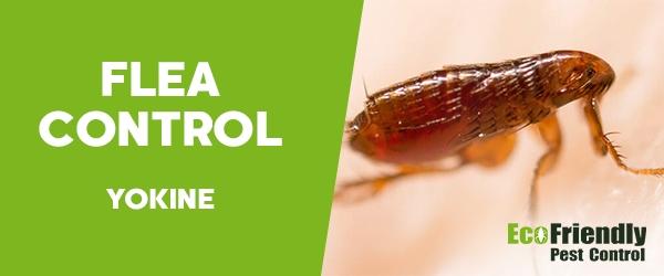 Fleas Control  Yokine