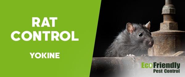 Rat Pest Control  Yokine