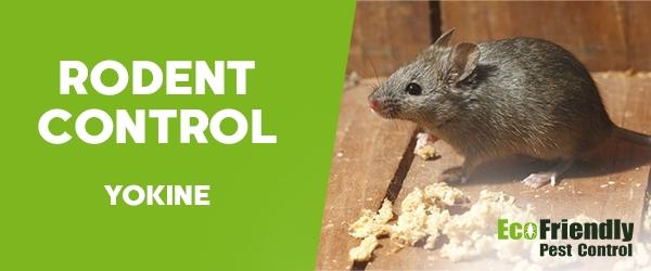Rodent Treatment  Yokine