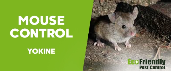 Mouse Control  Yokine