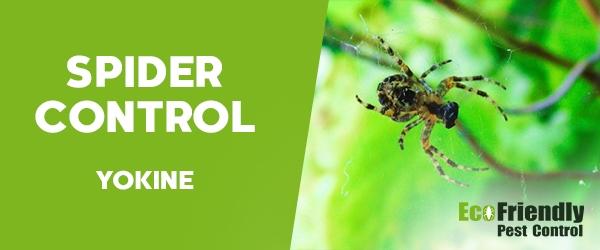 Spider Control  Yokine
