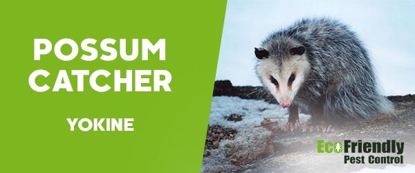 Possum Catcher  Yokine